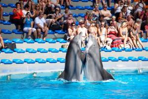 Шоу дельфинов в Зоомарине