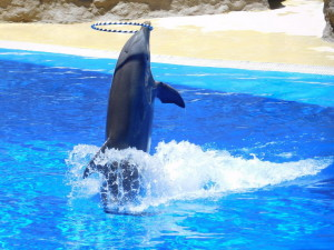 Дельфинье шоу