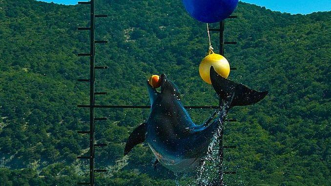 Дельфинарий, Большой Утриш