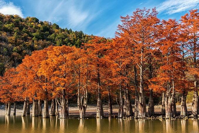 Кипарисовое озеро в Сукко - одна из достопримечательностей под Анапой