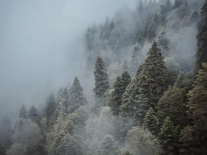 Сочи, горный лес