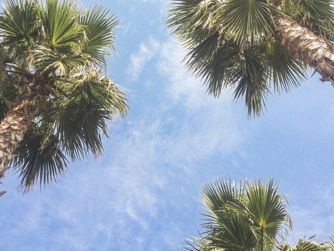 Сочи, пальмы
