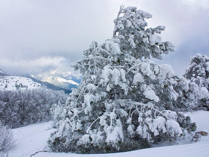 Ай-Петри зимой, фото Pavel dp