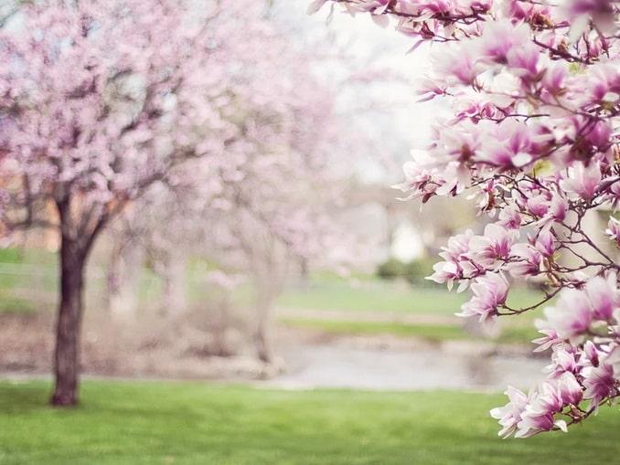Весенний Сочи - стоит поехать?