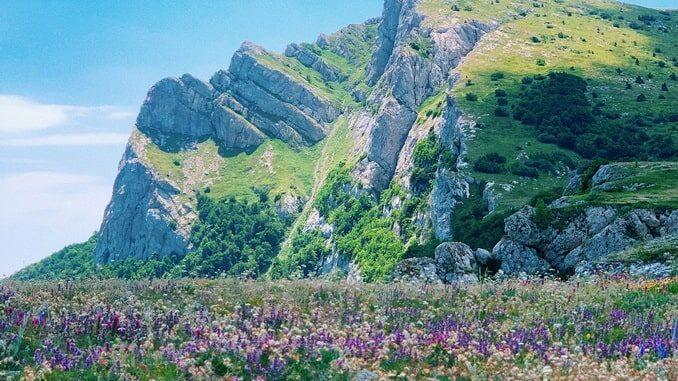 Цветущий Крым - когда лучше ехать?