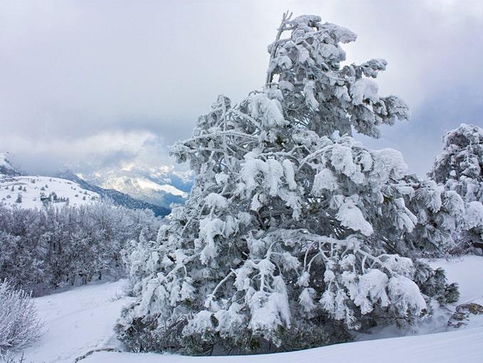 Ай-Петри в Крыму зимой, снег, фото Pavel dp / Wikimedia Commons