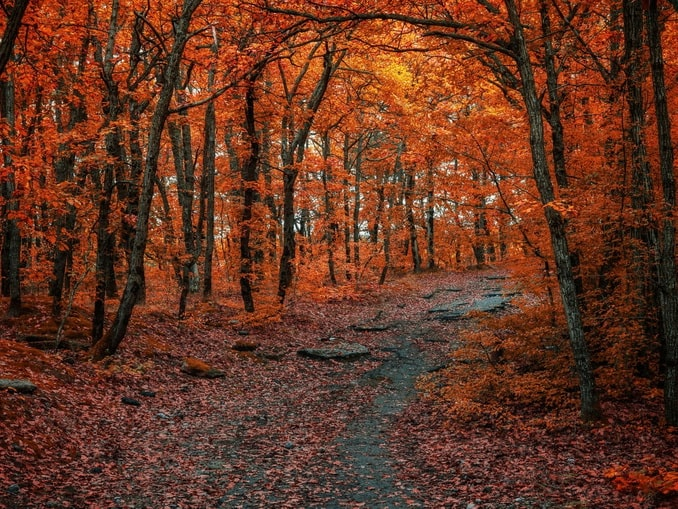 """В ноябре в Ялте стоит """"золотая осень"""""""